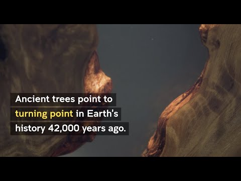 Ancient trees show turning point in Earth history 42,000yr ago.