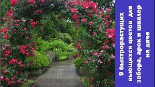 ❀ 9 лучших быстрорастущих вьющихся цветов для забора, арок и шпалер на даче