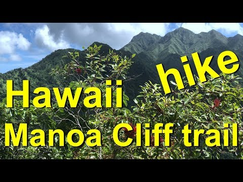 Hawaii's Manoa Cliff Hiking Trail