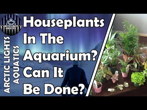 Houseplants In The Aquarium - Using Cheap Garden Center Plants Instead Of Aquarium Store Plants