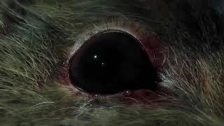 RESIDENT EVIL 2 REMAKE   Official Gameplay Trailer PS4 E3 2018