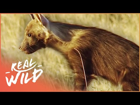 Ghosts Of The Great Salt Lake [Brown Hyena Documentary] | Wild Things
