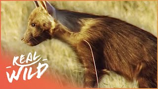 Ghosts Of The Great Salt Lake [Brown Hyena Documentary] | Real Wild