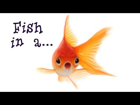 Catching BIG FISH in the ARCTIC CIRCLE!!! (FISHING IN NORWAY) from YouTube · Duration:  14 minutes 20 seconds
