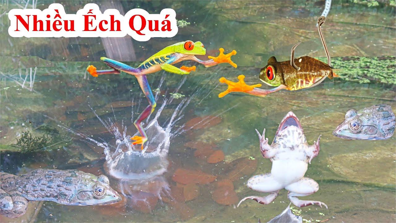 Phát Hiện 1 Nơi Rất Là Nhiều Ếch ! Tha Hồ Bà Mắt Tha Hồ Mà Câu / Catch Frog In Hole