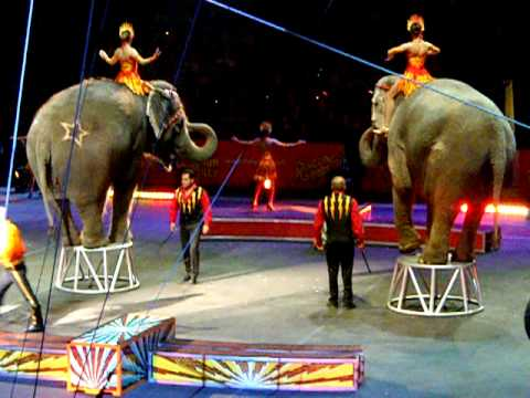 Circus Elephants Perform