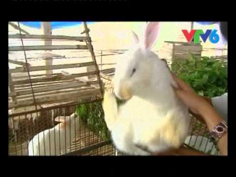 Sinh ra tu lang - Mô hình nuôi thỏ - Anh Dương Mạnh Tuấn