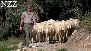 Heile Welt, hartes Brot: Hirten - Dokumentation von NZZ Format (2009)