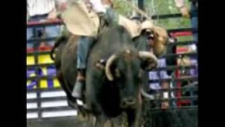Bucking Bulls Go To Brainerd, MN