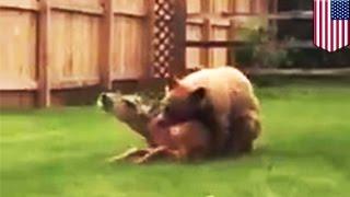 腹を空かせたクマに食べられているシカが絶叫している衝撃映像が、2015...