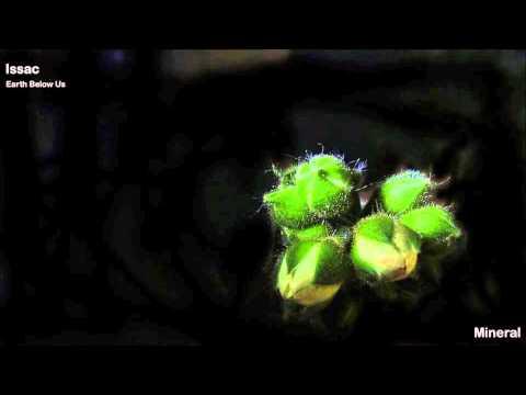 Issac - Earth Below Us - Mixed Album - Mineral