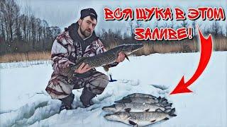 В этом ЗАЛИВЕ очень много ЩУКИ Рыбалка на ЖЕРЛИЦЫ Ловля ОКУНЯ