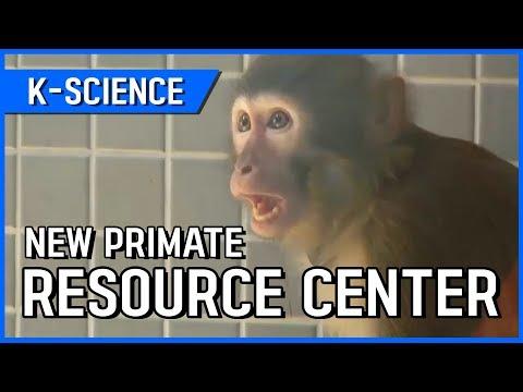 New Primate Resource Center [K-SCIENCE] / YTN KOREAN
