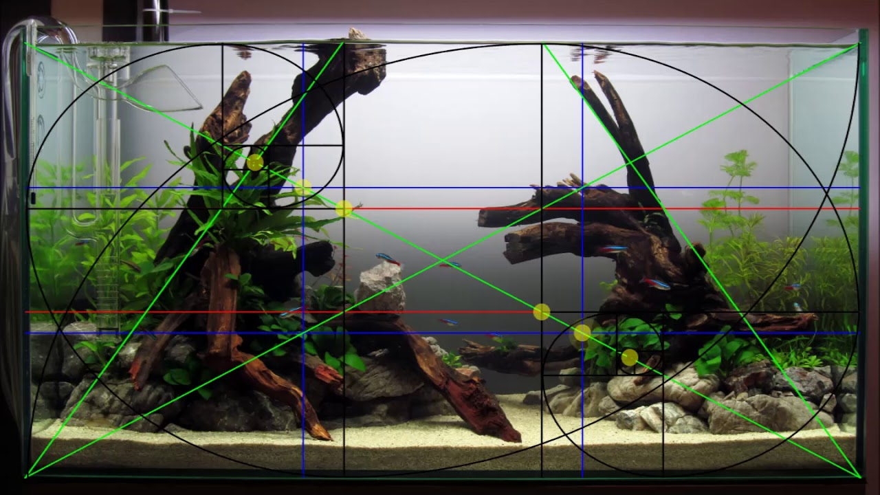 Analysing The Rules Of Composition At My New Aquascape Youtube