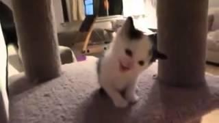 超可愛~小貓仔與主人的對話