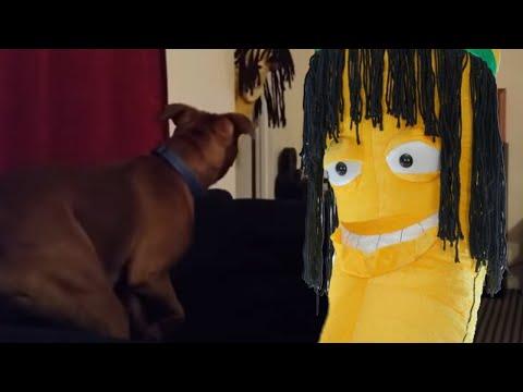 Rastafarian Banana vs Dog & Rastafarian Banana vs Dog - YouTube