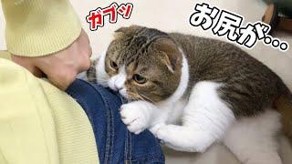 【悲報】猫にお尻を噛まれました…泣🐈