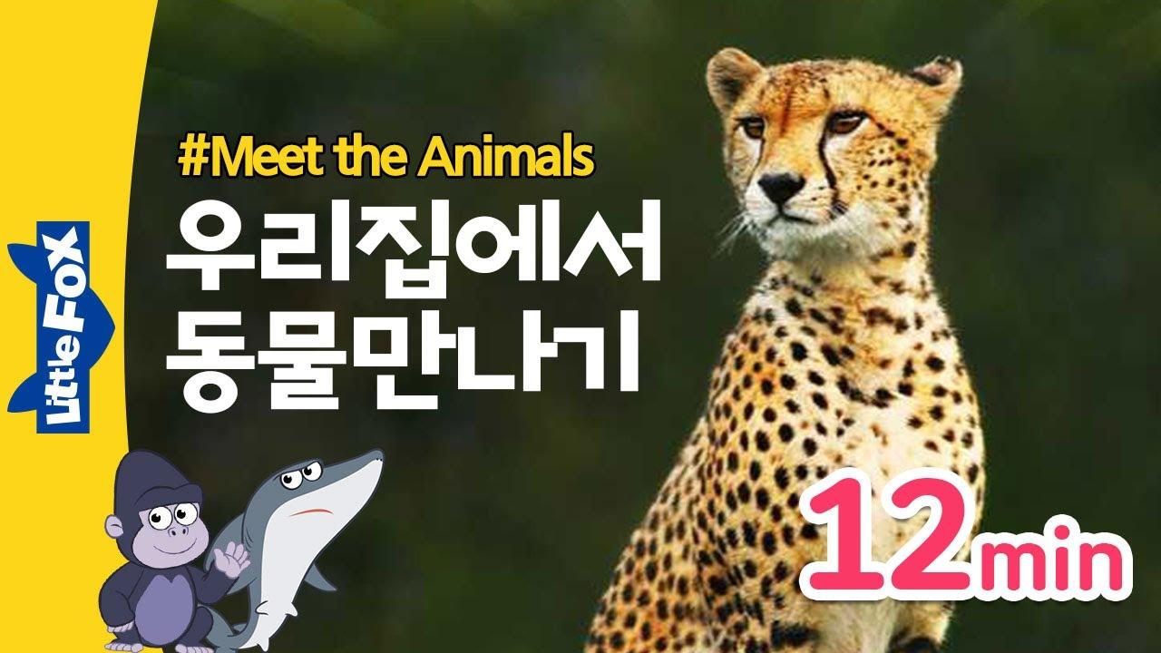우리집에서 야생동물을 만나요 | 백상아리 상어, 치타,  악어, 회색곰 | 동물동화 모음집 12분 |  홈스쿨링 영어 | 리틀팍스