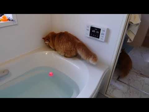 A cat fell into the bath tub 2~ 720p