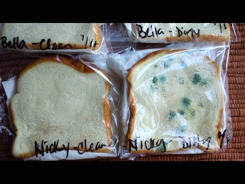What Can Happen If You Eat Mouldy Food