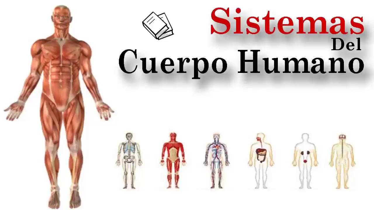 imagenes sistemas del cuerpo humano
