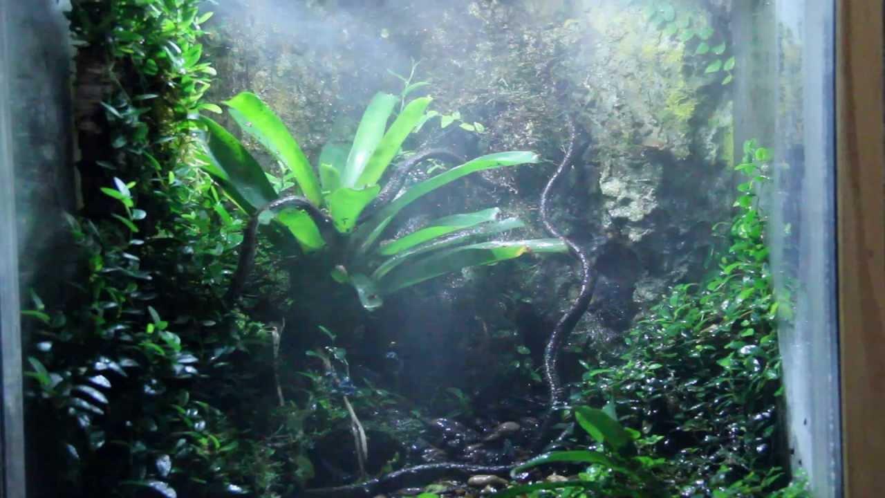 The Jungle 2013