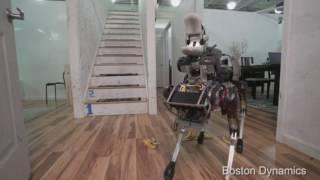 robot dog doesn t like bananas