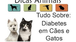 hqdefault - Sintomas De Diabetes Mellitus Em Gatos