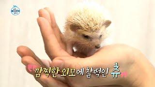 """[나혼자산다 선공개] """"안녕하세요 제 이름은 …"""