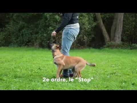 Chausson Pour Chien Neige - 10 techniques à savoir - Les bases de l'éducation canine - En 15 minutes