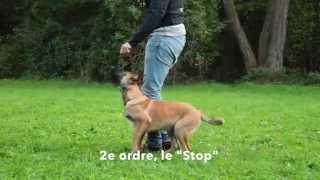 Dressage des chiots : les ordres de base de l'éducation canine