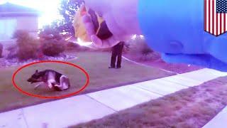 米ユタ州で暴走したジャーマン・シェパードに向かって警察官が5万ボルト...