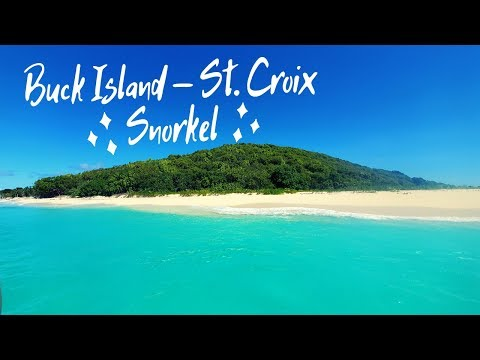 Snorkeling | Buck Island, St. Croix | US Virgin Islands