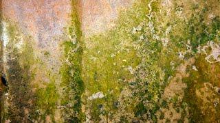 Causes of Mold - Avoiding Mold