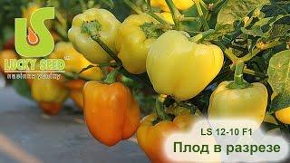 LS 12-10 F1 перец (Lucky seed) плод в разрезе