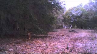 Drew Ivory Hunting