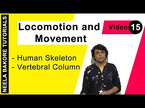 Locomotion and Movement - Human Skeleton - Vertebral Column