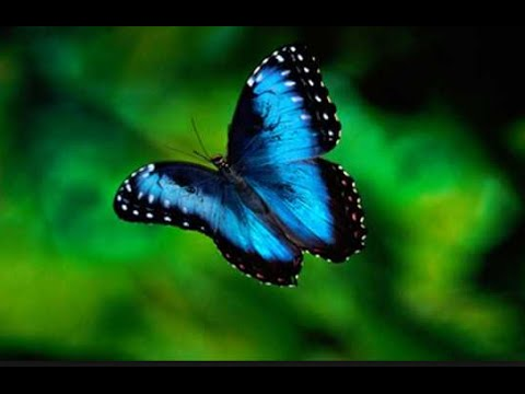 BUTTERFLY GARDENS IN VICTORIA BRITISH COLUMBIA - YouTube