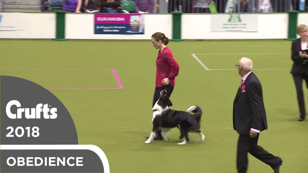 Obedience - Bitch Championship - Part 18   Crufts 2018