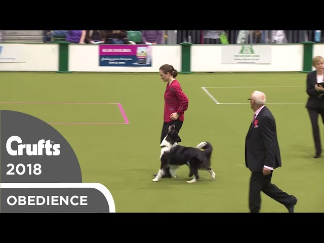 Obedience - Bitch Championship - Part 18 | Crufts 2018