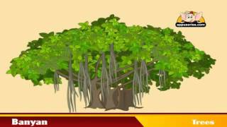 Learn about Plants - Trees