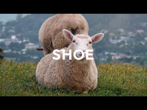 Allbirds Wool Runners: Comfy Shoes Made From Sheep