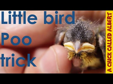 Little bird has a poo-trick