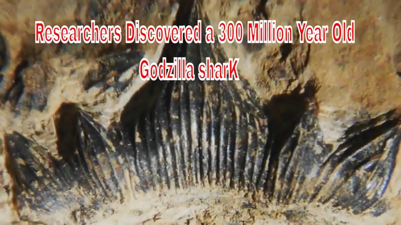 "300 million-year-old ""Godzilla shark"" is now officially named Hoffman's Dragon Shark"