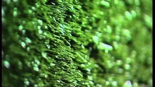 ОПТИЛОН искусственная трава(, 2014-09-09T06:03:16.000Z)