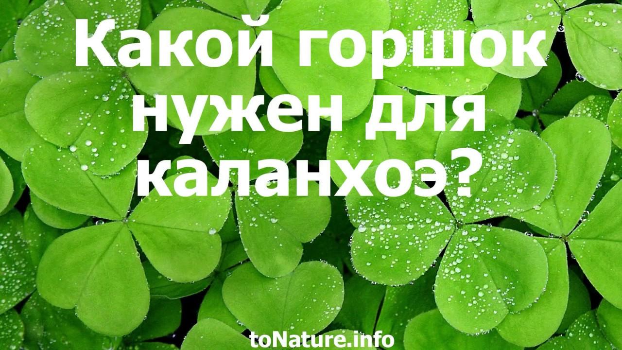 Комнатные растения. Что может вырасти в цветочном горшке. - YouTube