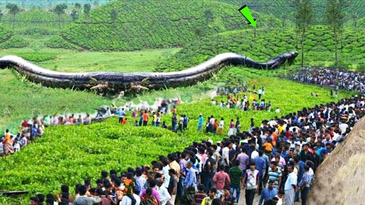 এখনো পর্যন্ত খুঁজে পাওয়া ৭টি সবথেকে বড় সাপ | BIGGEST SNAKES EVER FOUND | Largest Snakes Bangla