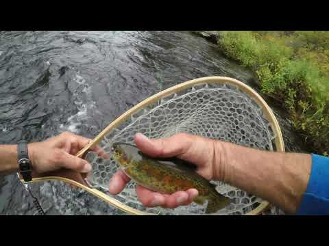 Fly Fishing The Metolius River With Ryan
