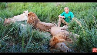 В Саванне среди львов может случиться всякое !КУРЬЕЗНЫЕ  СЛУЧАИ !Anything may happen in Savanna.