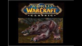 Oso infestado Mascota de cazador World of Warcraft